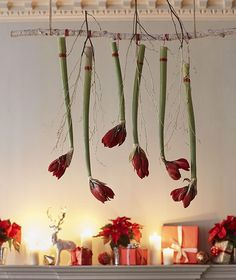 How to arrange Christmas flowers at home Six stems of red Christmas amaryllis hanging from a branch above a mantelpiece Christmas Flower Decorations, Christmas Arrangements, Christmas Flowers, Valentines Day Decorations, Red Christmas, Flower Arrangements, Xmas, Diy Ombre, Amaryllis Bulbs