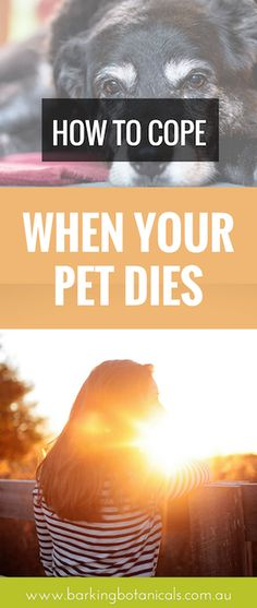 Anybody that has had a close connection with an animal knows that when your pet dies, losing them is an emotional and devastating experience and people often find it very difficult to cope.  For this blog post I have invited the wonderful Vicky Nonas from By My Side Grief Counselling and Pet Loss Support to share her advice on how to cope when a pet dies.