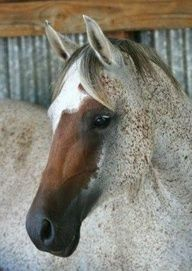 Brown & White Speckled Horse