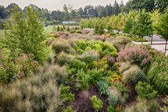 The Landscape Architecture Foundation publishes comprehensive study of Cornell Plantations' bioswale garden   Cornell Plantations