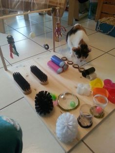 Katzenspielbrett The Effective Pictures We Offer You About cat playground diy A quality picture. Diy Cat Toys, Foster Kittens, Cats And Kittens, Diy Jouet Pour Chat, Chat Facebook, Hedgehog Pet, Cat Hacks, Knitted Cat, Cat Playground