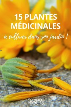 15 plantes médicinales à cultiver dans son jardin Here is a selection of 15 medicinal plants with many virtues to cultivate in your garden!