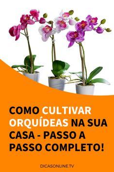 Orquideas cultivar Indoor Garden, Indoor Plants, Orquideas Cymbidium, Popular Crafts, Flat Ideas, Diy Keychain, Small Backyard Landscaping, Exotic Plants, Beautiful Gardens