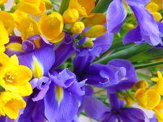 Belíssimas orquídeas amarelas e roxas