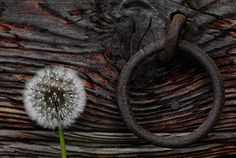Flora Photography by Giuseppe Guadagno-AmO Images-AmO Images