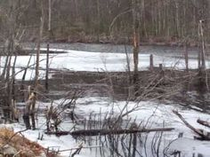 Beavers Den at Mass Audubon Waseeka #MassAudubonWaseeka #HopkintonMassachusetts #NatureWalk #BeaversDen