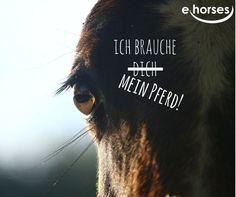 <3 Unsere Pferde <3