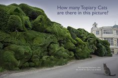 The Topiary Cat Audley End Puzzle | by Rich Saunders