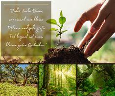 """Heute ist der Internationale Tag des Waldes! Bei dem diesjährigen Motto """"Wiederherstellung von Wäldern"""" geht es um die Notwendigkeit der Erhaltung und den Wiederaufbau von Wäldern und Ökosystemen. Denn die Wälder sind für uns und die Tiere lebensnotwendig! 🌲🌴 Bei der Korkernte werden die Bäume durch die Schälung nicht beschädigt. Die Rinde wächst wieder nach und der Baum muss daher nicht gefällt werden. 🌳 #Wälder #Umwelt #Bäume #Natur #Kork #Verkorkst Motto, Fruit, Food, Conservation, Plants, Nature, Essen, Meals, Eten"""