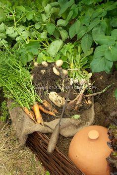 carrots n potatoes