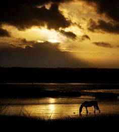Horse taking his last drink before the sun sets..