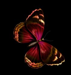 everyday a different color, beautiful gifs, soft goth, nature. Butterfly Gif, Gifs, One And Only, Different Colors, Find Image, Messages, Animals, Dreams, Ana Rosa