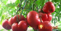 Grădinărit Archives - Page 8 of 18 - Fasingur Tomato Garden, Food Decoration, Sustainable Design, Permaculture, Interior Design Living Room, Organic Gardening, Planting Flowers, Color Schemes, Vegetables