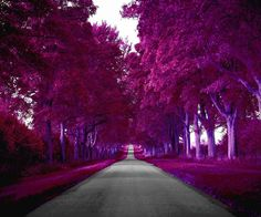 Purple and pink nature Magical Pictures, Cool Pictures, Most Beautiful Images, Beautiful Places, Qhd Wallpaper, Pink Nature, Purple Trees, Sky Sea, Beautiful Gardens