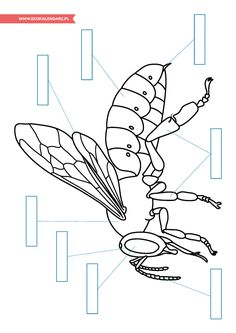 Dzień Pszczół – pakiet edukacyjny | EKO Kalendarz Printable Activities For Kids, Outdoor Activities For Kids, Animal Activities, Montessori Activities, Science Activities, Primary Science, Teaching Science, Science For Kids, Bees For Kids
