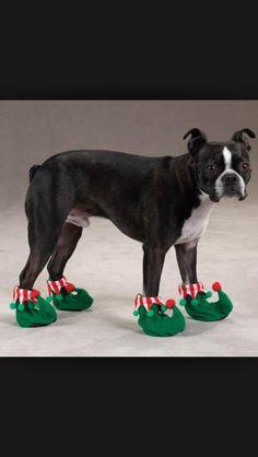 Cute dog shoes