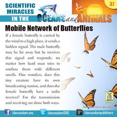 Mobile Network of Butterflies  If a female butterfly is carried by the wind to a high place, it sends a hidden signal.  #ScientificMiraclesInTheOceansAndAnimals  #DarussalamPublishers #IslamicEBooks #AmazonKindle  #KindleStore