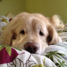 Brody, sadly missed by his owners.