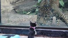 These Shelter Pets Were Taken On A Field Trip To Meet Their Exotic Relatives At The Local Zoo | Bored Panda Zoo Animals, Cute Animals, San Antonio Zoo, All Gods Creatures, Bored Panda, I Love Cats, Animal Shelter, The Locals, Hanging Out