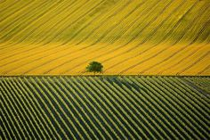 Earth From Above - France, Yann Arthus-Bertrand Aerial Photography - France From Above - Agricultural landscape near Cognac, Charente, France 27 Photos Of Eyes, Cool Photos, Pictures Images, Amazing Photos, Funny Photos, Agriculture, Père Lachaise Cemetery, Arthus Bertrand, Earth Photos