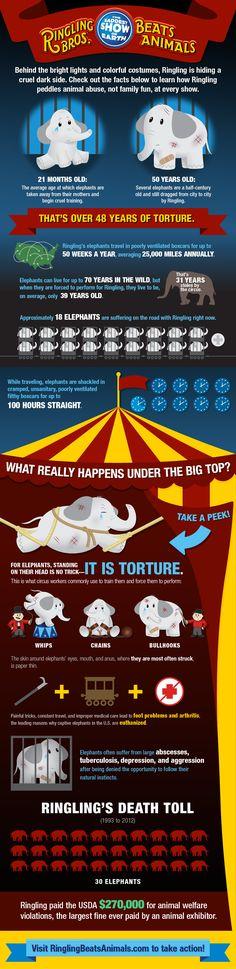 Ringling's Cruelty Exposed (Infographic) | Features | PETA  http://www.peta.org/features/ringlings-cruelty-infographic/?utm_campaign=0314%20Ringlings%20Cruelty%20Exposed%20Infographic%20Post&utm_source=PETA%20Facebook&utm_medium=Promo