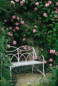 Cozy Backyard, Backyard Seating, Garden Seating, Garden Benches, Garden Beds, Pink Garden, Dream Garden, Roses Garden, Modern Garden Design
