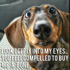 I'm pinning this because he's right, I do feel compelled to buy him a bone!