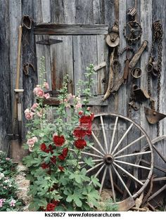 Picture of Pink Red Hollyhocks Flowers By Side Old Weathered Barn Door Wagon Wheel Tools - Search Stock Photography, Photos, Prints, Images, and Photo Clipart - Shed Decor, Diy Garden Decor, Wagon Wheel Decor, Wagon Wheel Garden, Wooden Window Boxes, Hollyhocks Flowers, Old Wagons, Rustic Gardens, Old Farm