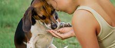 Los alimentos y golosinas para mascotas contaminados con bacterias pueden hacer que usted o su mascota se enfermen.  Conozca más sobre la investigación de la FDA para reducir al mínimo las enfermedades transmitidas por los alimentos para mascotas. http://go.usa.gov/3PsyP