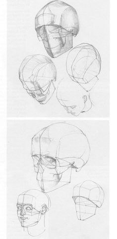 From the anatomy book by Gottfried Bammes