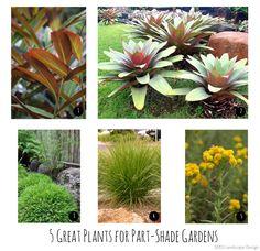 5 great plants for part shade gardens in brisbane seed landscape design brisbane office plants