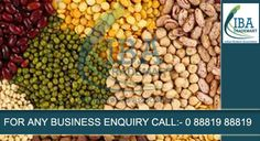Pulses Imports in India Increased in August Pulses imports saw a steady rise in August as well. According to Ministry of Commerce, import during August 2015 stood at Rs 1721.17 crores, while import during August 2014 was Rs. 1432.81 crores. Therefore August 2015 imports have jumped by 20.13% when compared with August 2014 figures.Continue......For more information visit:-http://goo.gl/YexXw4