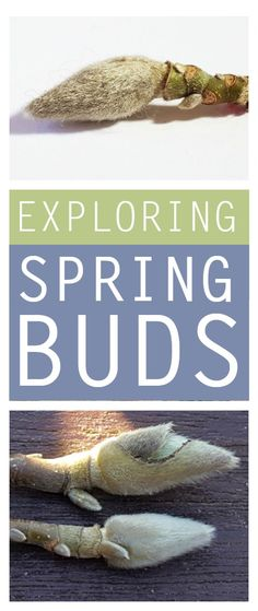 spring buds - exploring spring buds with kids