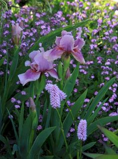 My Favorite Plant Combinations 7