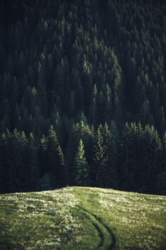 { the meadow and the forest }