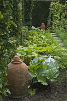Terracotta forcing pots and glass cloches in the potager style garden at Woolbeding House, West Sussex Potager Garden, Veg Garden, Edible Garden, Garden Landscaping, Garden Paths, Garden Art, Vegetable Gardening, Garden Ideas, Amazing Gardens