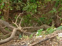 Can you spot three monkeys ?? Van son temple ,Con Dao archipelago island vietnam