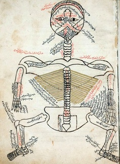 The skeleton, drawn in red and black ink, viewed from behind with the head hyperextended so that the face looks upward.  From The Anatomy of the Human Body (Tashrih-i badan-i insan) written in Persian at the end of the 14th century by Mansur ibn Ilyas.