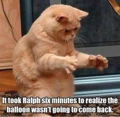 I want a fat cat!