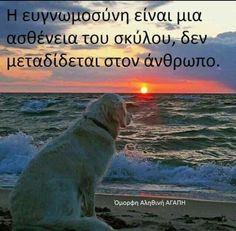 Animals And Pets, Cute Animals, Greek Quotes, Animal Quotes, Philosophy, Personality, Letters, Thoughts, Photo And Video