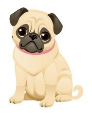 Cute Pug vector art illustration