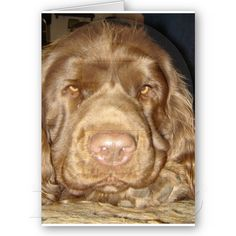 Can't forget the Sussex Spaniel