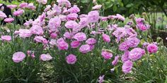 These sweetly scented plants add another level of enjoyment to your garden.