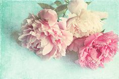 """Peony photograph """"Like Yesterday"""" pink peonies, fine art print, floral photography, pink, aqua,shabby chic home decor,cottage decor"""