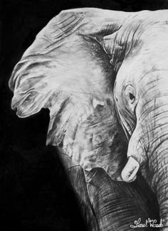 The African Elephant. Drawing by Liesel Wessels, South African Artist. Medium: Pencil/Charcoal on Paper Size: 30 x Created as commission for customer in Kathu Photo Reference: Shutterstock (Donovan van Staden) Pencil Art, Pencil Drawings, African Drawings, South African Artists, African Elephant, Wildlife Art, Photo Reference, Arts And Crafts, Portrait