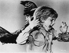 Google Image Result for http://msnbcmedia2.msn.com/j/MSNBC/Components/Photo/_new/120103-hitchcocks-birds-child-hmed-313p.grid-6x2.jpg