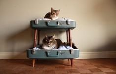 10 Trendy Upcycled Cat Beds