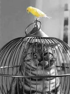 A cat and a bird