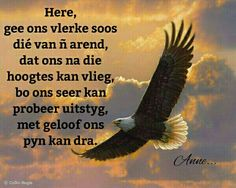 Afrikaans, Bald Eagle, Prayers, Bible, Messages, Living Room Ideas, Bedroom, Biblia, Prayer