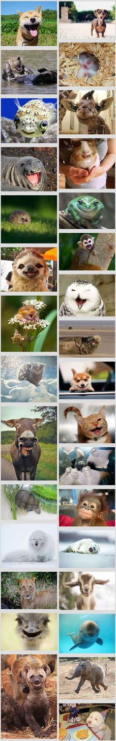 The Happiest Animals In The World That Will Make You Smile  // funny pictures - funny photos - funny images - funny pics - funny quotes - #lol #humor #funnypictures